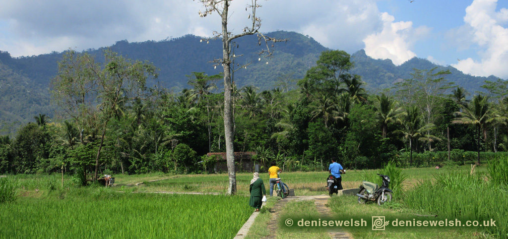 jogja-countryside-ricefields-template