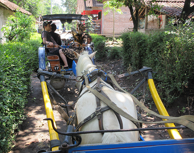 Take a horse and buggy tour through the Yogyakarta countryside