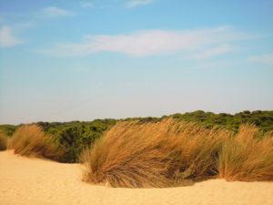 Doñana Beach